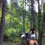 Riding Through the Cedars