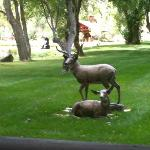Many beautiful statues on the property.