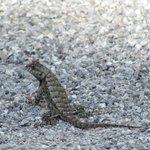 Dozens of Adorable Lizards Sunning