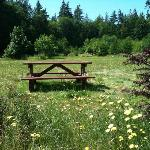 picnic table in the field