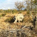 Mama and baby rhino spotted while on safari outside Kruger Park.