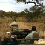 Looking forward from our all-terrain vehicle on a safari in a private game reserve outside Kruge