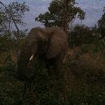 We surprised an elephant just after sunset in a private game reserve outside Kruger Park.
