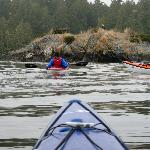 Kayak tour. Enjoying wildlife of Clayoquat