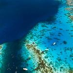 Divers below!