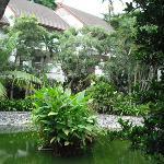 Der nett angelegte tropische Garten