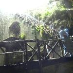 Stairs leading down into cenote