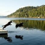 Dogs on dock