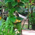 Foto Shiva Garden