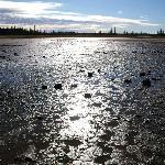 雨の翌日のSalt Plains