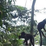 Monos monos monos