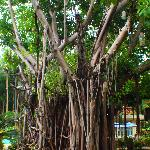 tree by the pools