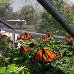 All-A-Flutter Butterfly Farm