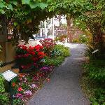 part of garden at Emily Carr House