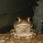 Toad in lobby fountain, happy to pose
