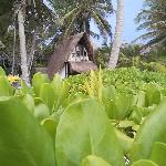 Cabana maya