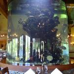 Aquarium in the dining room