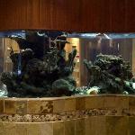 The aquarium in the spa
