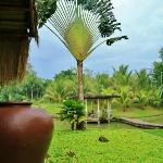 banga and giant palm tree