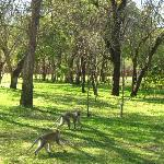 Zambezi Sun territory