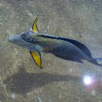 Fisch direkt am Strand vorne