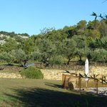 View of olive trees - lots of places to sit throughout the property