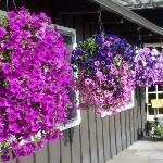 Fleurs de la cour intérieure