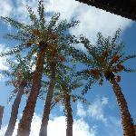 palmiers des temples saadiens