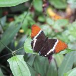 butterfly gardenbutterfly garden