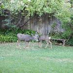 Afternoon visitors