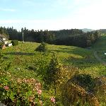 Zimmeraussicht in den Schwarzwald