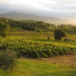 Uitzicht over de wijngaard