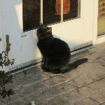 Hampton cat
