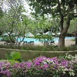 ガーデンとプールが綺麗