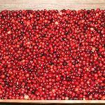Freshly Sorted Cranberries