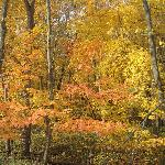 Stunning fall colors along the trail