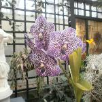 Amazing Flowering Plants From All Pver The World