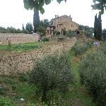 olive groves and main house