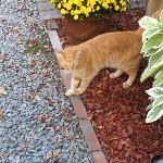 Puss in Boots Lives in the Owner's Cottage & Roams the Grounds
