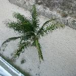 These are the palm trees down below our room