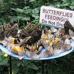 Butterfly Conservatory, Niagara Falls, Ontario
