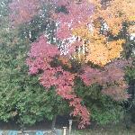 Fall colors behind the inn.