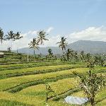 De mooie rijstvelden