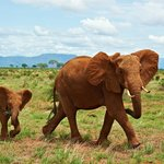 Elefanten ohne Ende