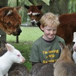 Leading the way with interactive Wildlife Encounters