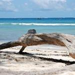unberührte Natur-Strand