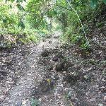 Weg zum Playa Las Macha