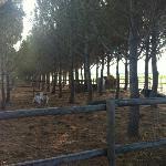 ALL'INGRESSO DELL'AGRITURISMO