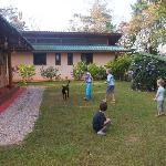 Die Hunde lieben es, mit dem Ball zu spielen