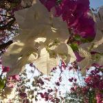 Farbenpracht auf dem Gelände der Fidelito Ranch